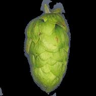 Bitter hops polaris