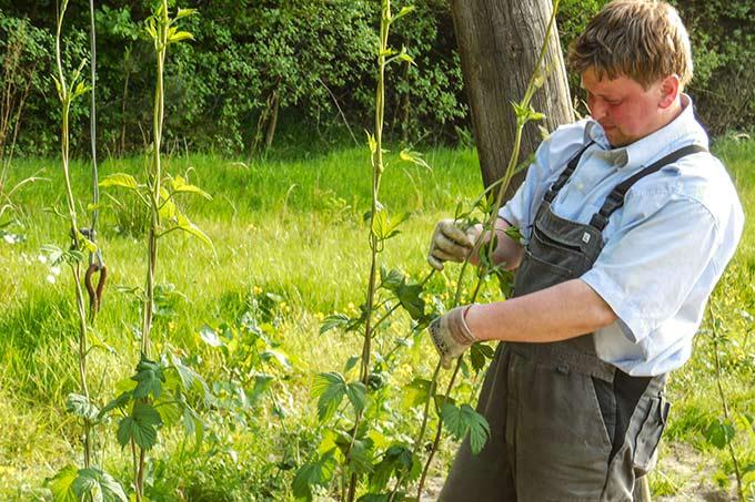 hopfenpflanzer hallertau