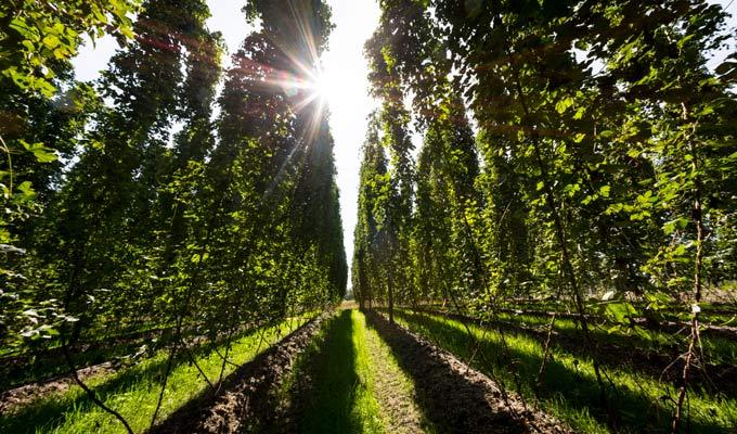 hop growers breweries